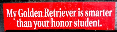 Honor Student Bumper Sticker